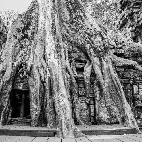 ov17-cambogia-02